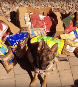Dog with Random Acts donations