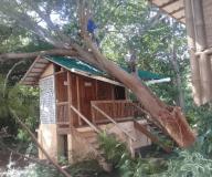 Fallen tree on the EcoLatrine building