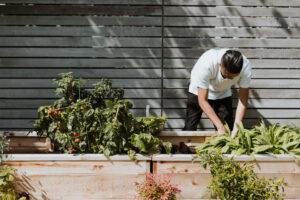 gardener tending plants